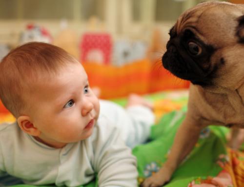 Perrhijo vs. Bebé